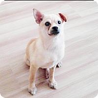 Adopt A Pet :: Bora - Fairfax, VA