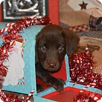 Adopt A Pet :: Montana (Fostered in TN) - Brighton, TN
