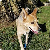 Adopt A Pet :: BOOMERANG - LaGrange, KY
