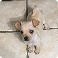 Adopt A Pet :: Myla - Fort Atkinson, WI