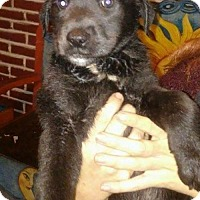 Adopt A Pet :: Janey - Dana Point, CA