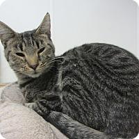 Adopt A Pet :: Dory - Kingston, WA