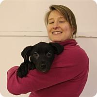 Adopt A Pet :: Archie - Elyria, OH