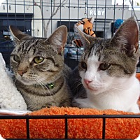 Adopt A Pet :: Joey and Sophie - Berkeley, CA