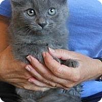 Adopt A Pet :: Rockefeller - Reston, VA