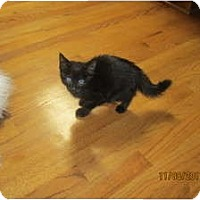 Adopt A Pet :: Beau - Sterling Hgts, MI