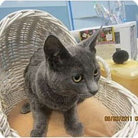 Adopt A Pet :: Sable - Sterling Hgts, MI