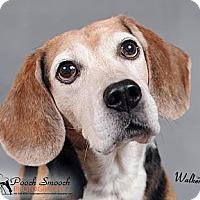 Adopt A Pet :: Walker - Yardley, PA