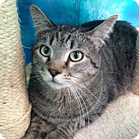 Adopt A Pet :: Timmy - Newport Beach, CA