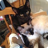 Adopt A Pet :: Salem - Kelso/Longview, WA