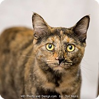 Adopt A Pet :: Cactus - Fountain Hills, AZ