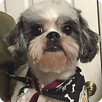 Adopt A Pet :: Rubert - Orlando, FL