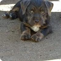 Adopt A Pet :: Marble - Daleville, AL