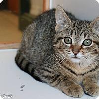 Adopt A Pet :: Mariah - Ann Arbor, MI