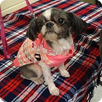 Adopt A Pet :: MISSY - Eden Prairie, MN