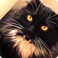 Adopt A Pet :: Dallas - Santa Clarita, CA