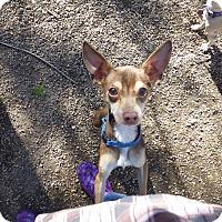 Adopt A Pet :: Bambi - Wyanet, IL