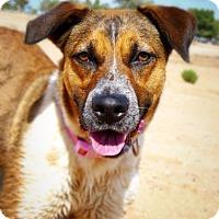 Adopt A Pet :: Emma - Casa Grande, AZ