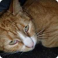 Adopt A Pet :: Max - Glen Mills, PA