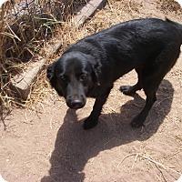 Adopt A Pet :: Jingles - Buchanan Dam, TX