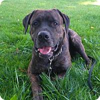 Adopt A Pet :: Buddy - Keswick, ON