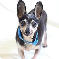 Adopt A Pet :: Petey Pablo - Bradenton, FL
