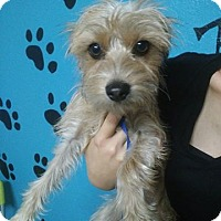 Adopt A Pet :: Maggie Mae - Meridian, ID