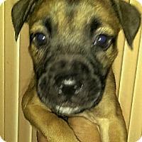 Adopt A Pet :: Darla - Fort Lauderdale, FL
