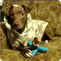 Adopt A Pet :: Cricket - Huntington, IN