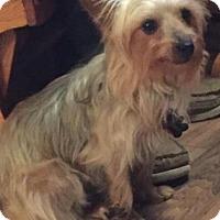 Adopt A Pet :: Marie - Wichita, KS