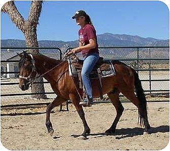 Mustang for adoption in Phelan, California - Lefty
