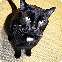 Adopt A Pet :: Duke - Xenia, OH