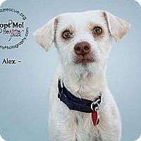 Adopt A Pet :: Alex - Phoenix, AZ