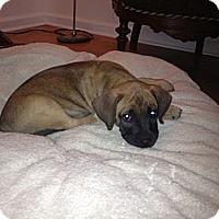 Adopt A Pet :: Zeus - ARDEN, NC