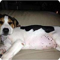Adopt A Pet :: Waylon - Richmond, VA