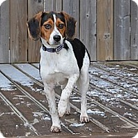 Adopt A Pet :: Kelly - Hamilton, ON