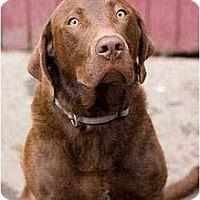 Adopt A Pet :: Diego - Portland, OR