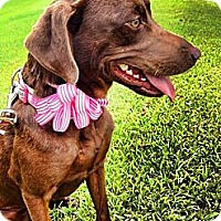 Adopt A Pet :: Holly - Silsbee, TX