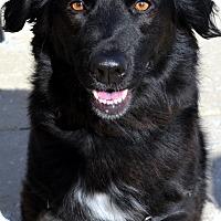 Adopt A Pet :: Bailey - Bridgeton, MO