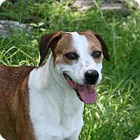 Adopt A Pet :: Colette - Lufkin, TX