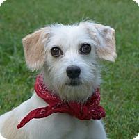 Adopt A Pet :: Romeo - Mocksville, NC