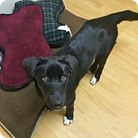Adopt A Pet :: Janet in Ct - East Hartford, CT