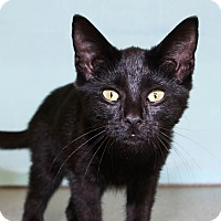 Adopt A Pet :: Midnight - Larned, KS