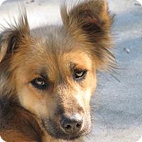 Adopt A Pet :: Maxine - Groton, MA