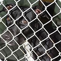 Adopt A Pet :: JULIE - Brooksville, FL