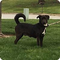 Adopt A Pet :: Gigi - New Oxford, PA