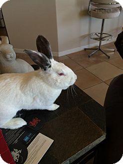 Californian for adoption in Albuquerque, New Mexico - Pearl