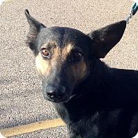 Adopt A Pet :: Kiki - PHOENIX, AZ