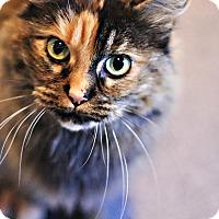 Adopt A Pet :: Joon - Lincoln, NE