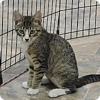 Adopt A Pet :: Meredith - Massapequa, NY